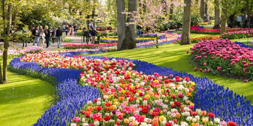 best way to get to keukenhof gardens from amsterdam - Amsterdam Garden